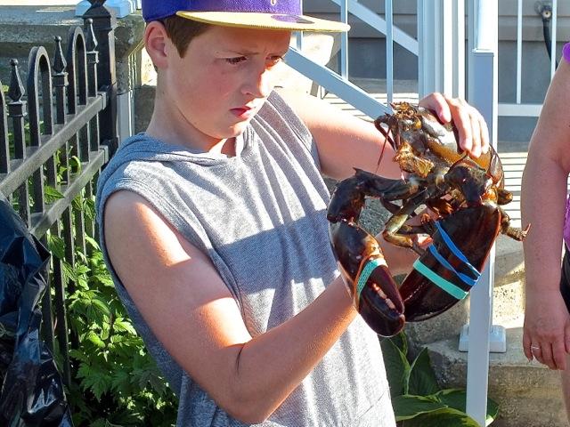 Pourquoi a-t-il choisi ce homard plutôt qu'un autre ? ? - photo T-Bear