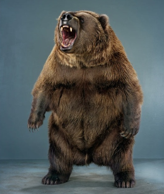 Portrait d'un ours - Jill Greenberg