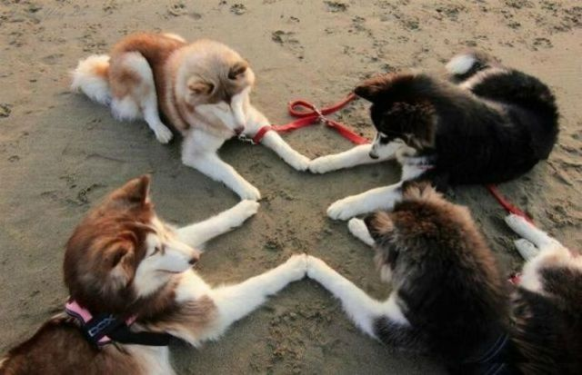 spiritisme canin