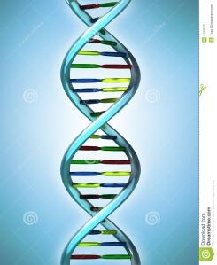 La chaine de nos gènes