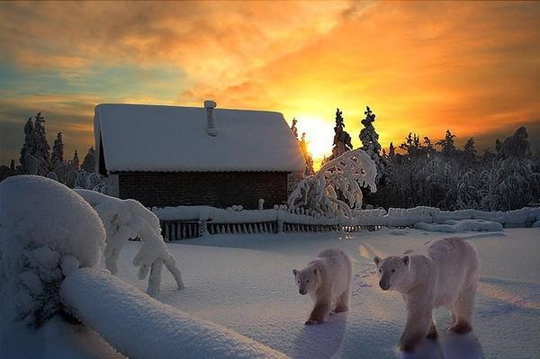 coucher-de-soleil-neige-ours-blanc (1)