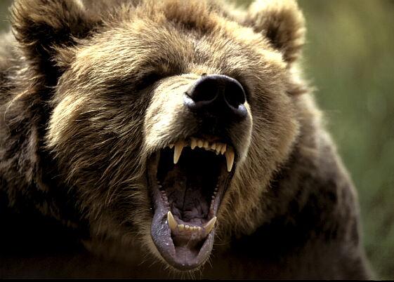 T-Bear en colère