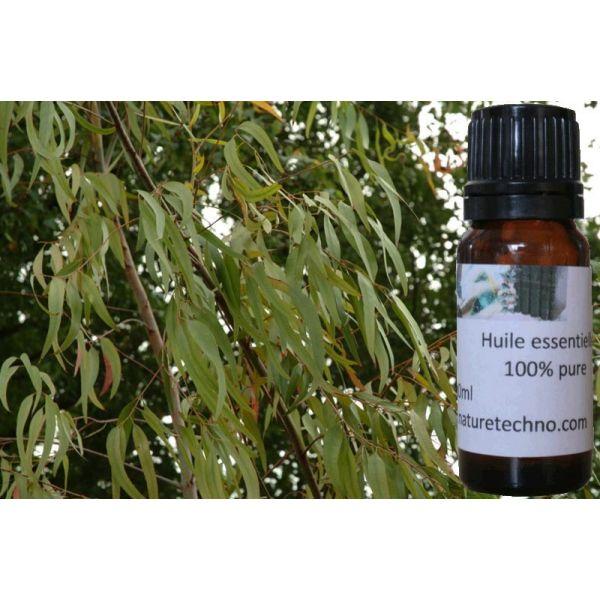 huile essentielle d'eucalyptus radié ou radiata