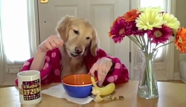 ginger-chien-prend-petit-dejeuner-640