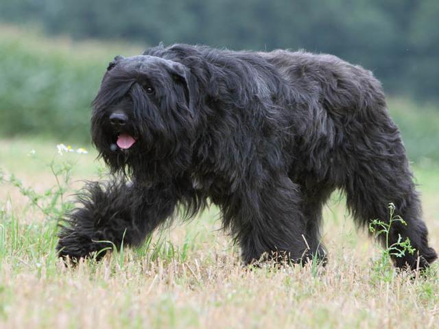 À quoi ressemblait Baloo. Gros nounours très gentil.