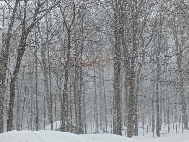 Les pétales de neige - T-Bear