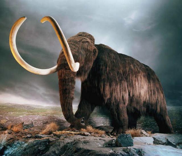 mammouth-laineux_Hawkoffire-flickr-cc-by-2.0_txdam26205_0f43b9