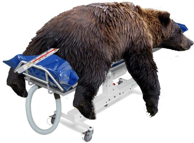 T-Bear malade