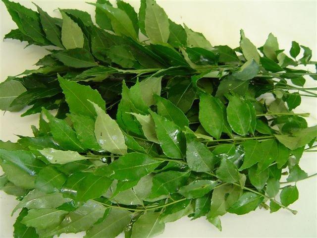 feuilles fraiches de curry, cari, kalopulé