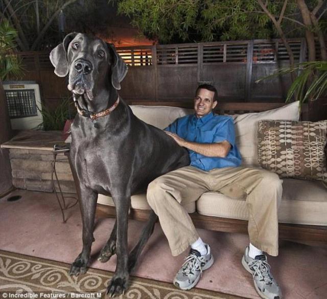 je-n-aimerais-guere-croiser-ce-chien-dans-image-328840-article-ajust_930