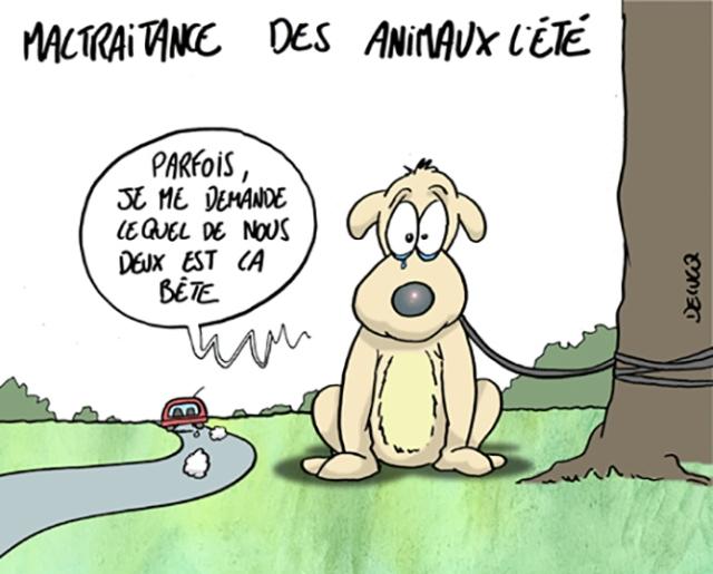 abandon-danimaux