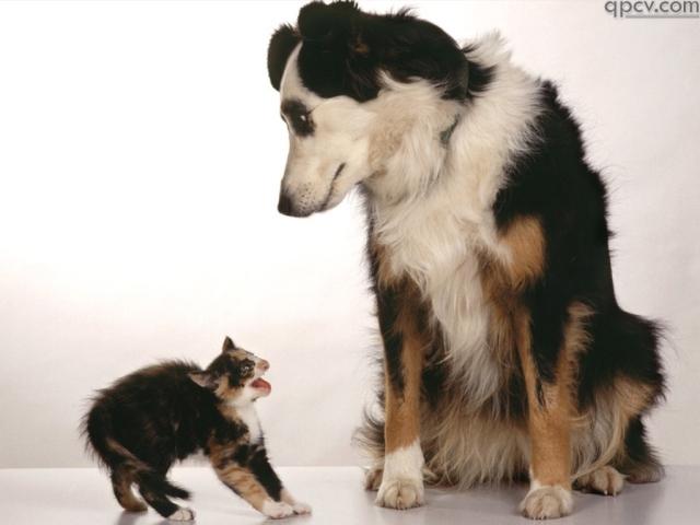 chien-et-chat râlant