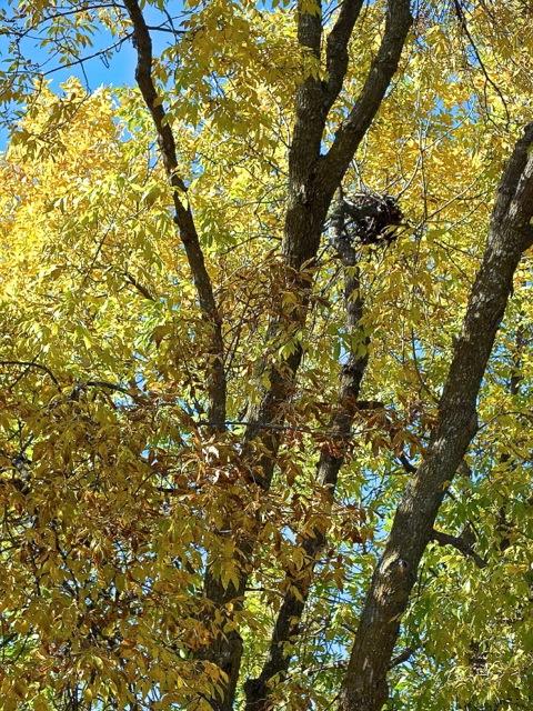 Un nid d'écurieux - T-Bear 2012