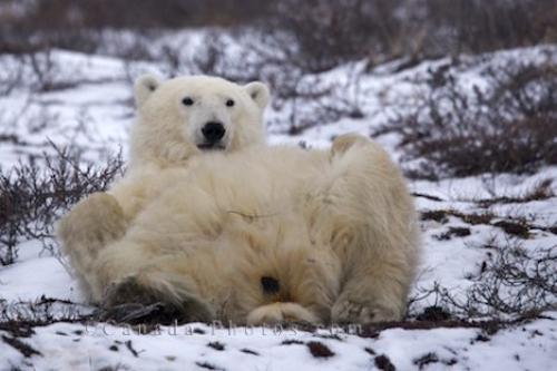 Qu'est-ce qui réveilla T-Bear ?