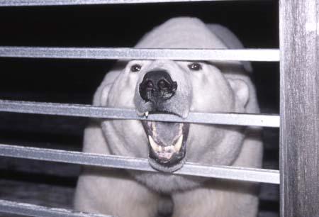 T-Bear derrière les barreaux