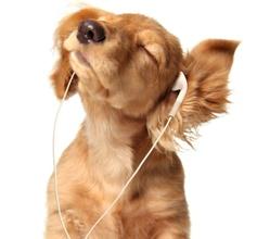 musique-chien-11