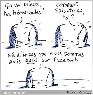 amis pingouins facebook