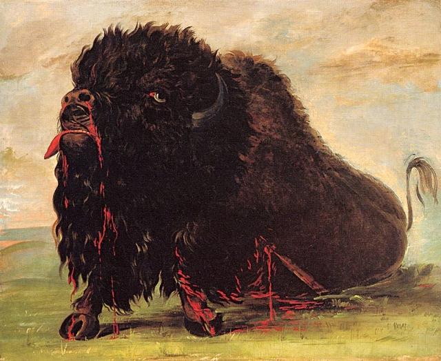 Dying buffalo par George Catlin