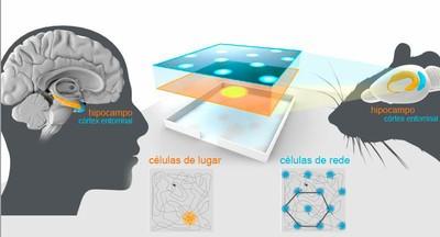 GPS cérébral