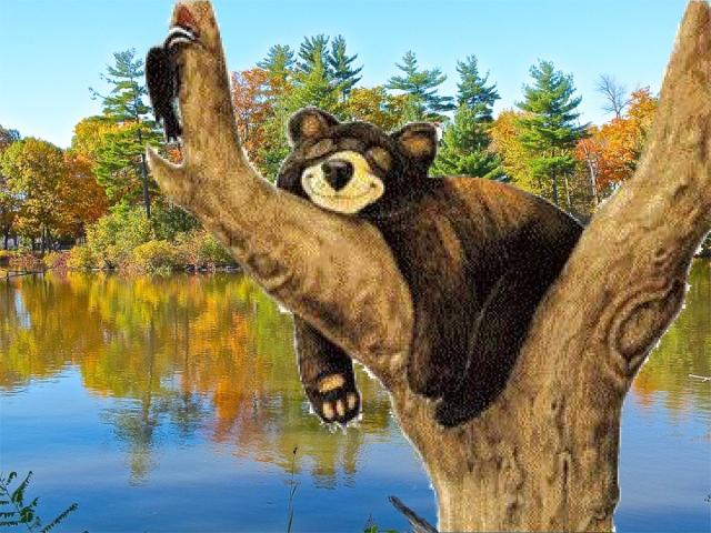 T-Bear dormant