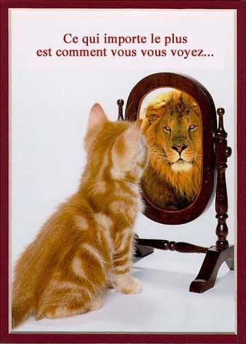chat-se-voyant-lion-dans-un-miroir