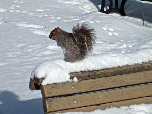 Ce que ne manque pas de faire Gonzague l'écureuil - T-Bear