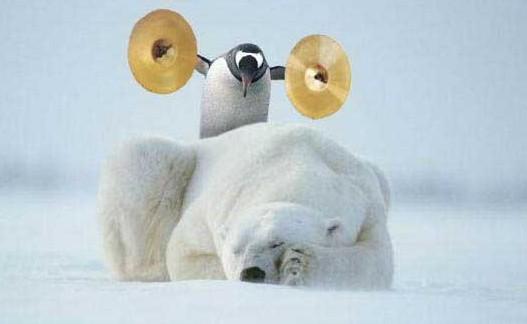 pingoin-sur-ours-polaire