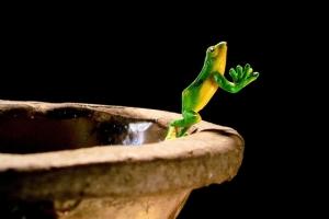grenouille-benitier-533807