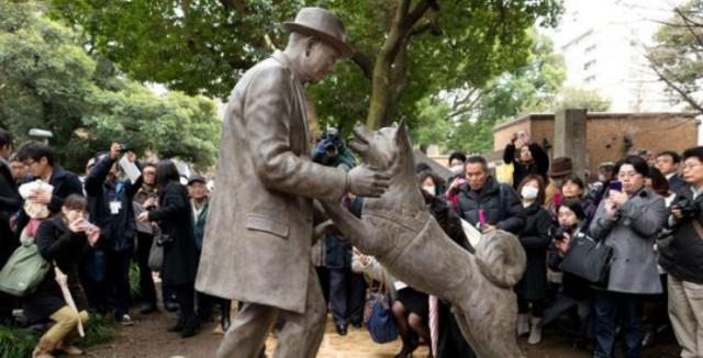Hachiko, le chien le plus fidèle du monde que le sculpteur Tsutomu Ueda a immortalisé dans le jardin de l'université de Tokyo