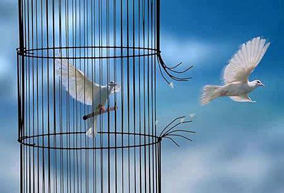 jpg_oiseaux_cage_cassee