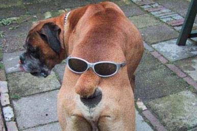 chien-tete-cul-humour-animal