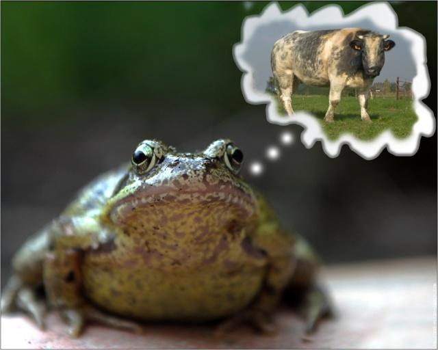 grenouille-printaniere