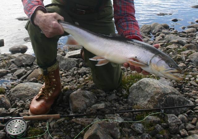 Allons à Kangiqsualujjuaq à pêcher l'omble chevalier