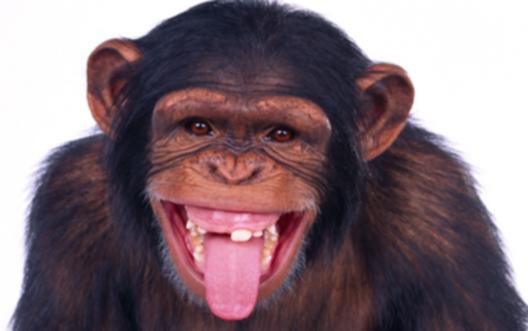 année-du-singe-horoscope-chinois-prévision-année-2016-zodiaque- chinois- singe-de-feu-