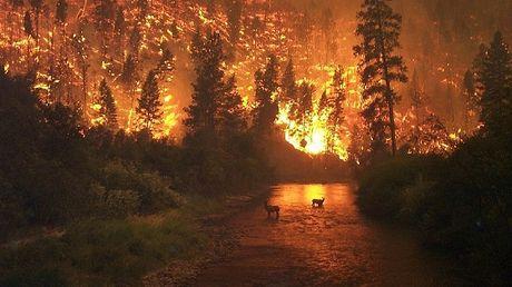 l-onde-de-choc-d-une-explosion-pourrait-permettre-de-casser-des-flammes-et-empecher-que-l-incendie-se-propage_65783_w460