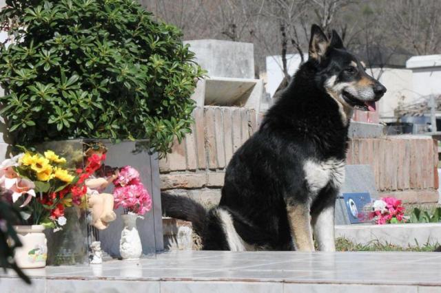Le chien Capitan sur la tombe de son maître